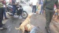 Perro cuidó a su dueño borracho mientras este dormía en la calle