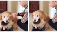 Conozca al perrito que protege a su pequeño dueño de los regaños de su padre