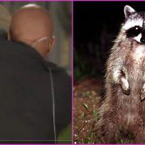 Un mapache ataca a un periodista en plena transmisión en vivo