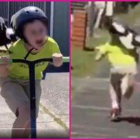 ¡Lo va a coger! Pájaro persigue a niño mientras monta patineta y las redes estallan de la risa