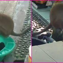VIDEO: Mono visita la terraza de una mujer para ayudarle a lavar la ropa