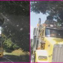 """""""La colambiananada"""": sujeto parquea una tractomula en medio de la vía para coger un mango"""