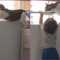 VIDEO: gato protege a un niño para que no se caiga por un balcón