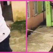 VIDEO: sujeto camina con una colonia completa de abejas en su brazo