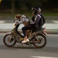 perro manejando moto